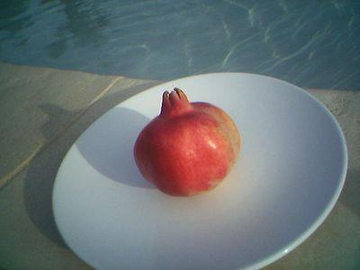 Pomegranate of Provence