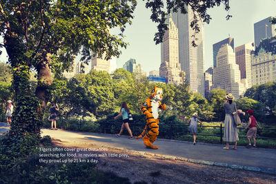 """MARKUS MUELLER personal work """"Panthera Tigris"""""""