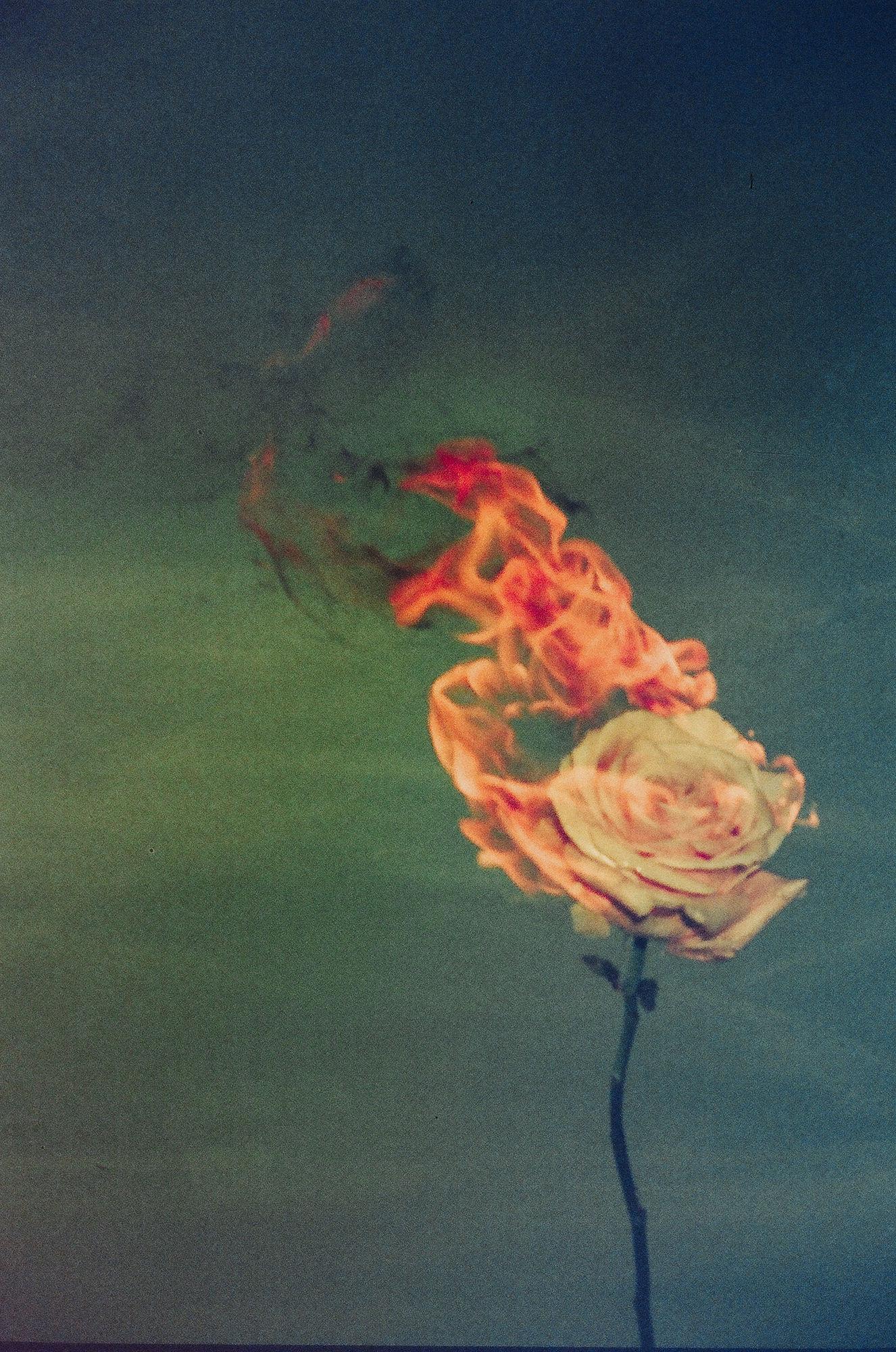Kate Bellm 'Amor' (HATJE CANTZ)