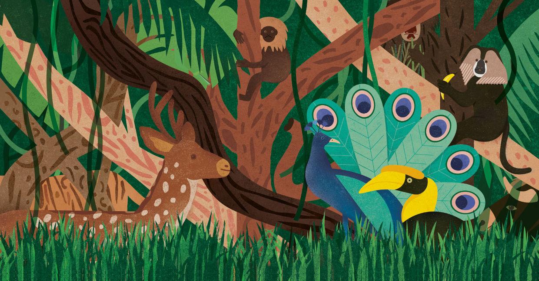 Judy Kaufmann - Kinderbuch