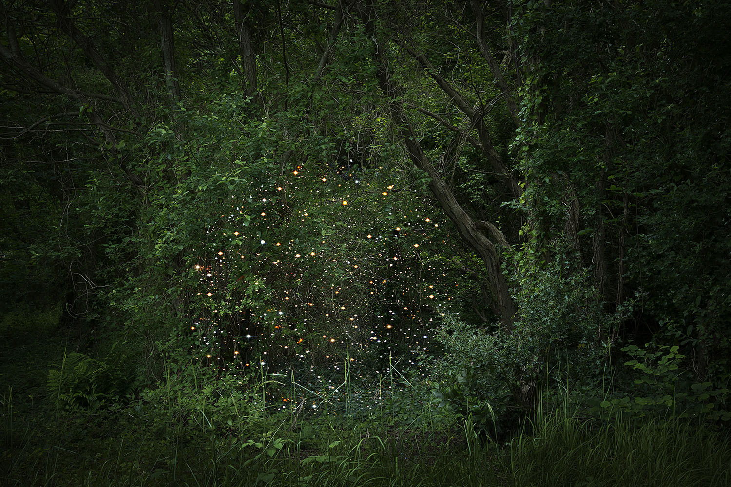 Ellie Davies - Starry starry night revisited at Sophie Maree Gallery