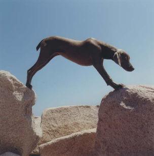 GALERIE BUGDAN UND KAIMER : WILLIAM WEGMANN *Dogs on Rocks - in the Woods - on the Seaside*