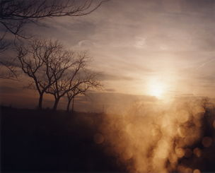 STEPHEN WIRTZ GALLERY : Todd Hido, Untitled# 3114-B, 2009