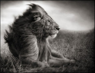 ATLAS GALLERY : Nick Brandt 'A Shadow Falls'