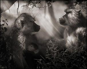 ATLAS GALLERY : Nick Brandt 'A Shadow Falls'