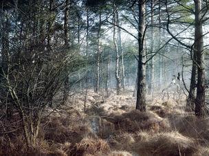BLICKFANG : Joerg Rothhaar