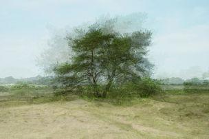 AANDO FINE ART : Kim BOSKE, Mapping