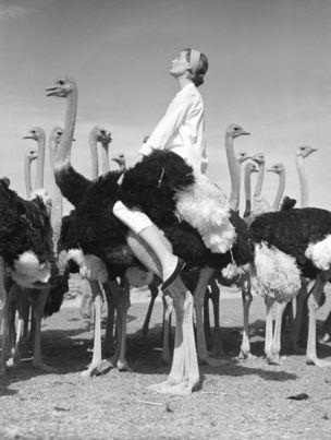 Gallery Vassie : Norman Parkinson, Wenda and Ostriches, South Africa, Vogue, 1951