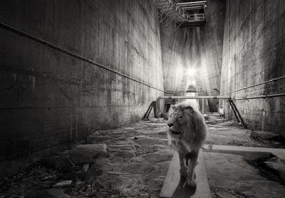 »Lost Animals«
