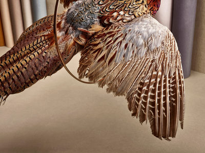 'Birduals' by Paloma Rincón c/o COMMON ERA & SERIAL CUT