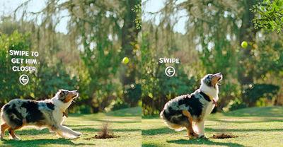 Pedigree AR - Fetch Across The Internet